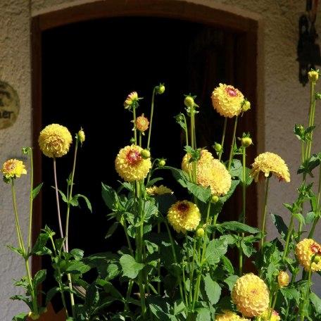 Wilkkomen, © im-web.de/ Gäste-Information Schliersee in der vitalwelt schliersee