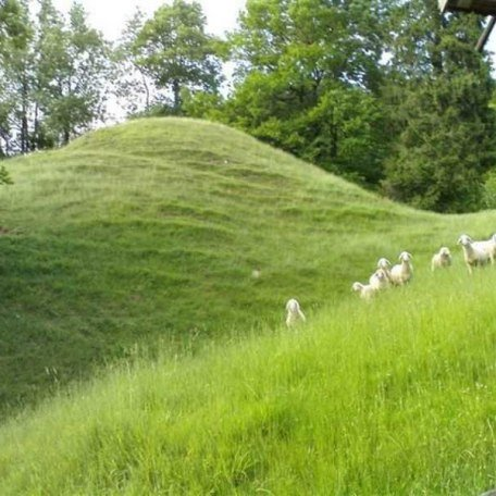 Schafe, © im-web.de/ Gäste-Information Schliersee in der vitalwelt schliersee