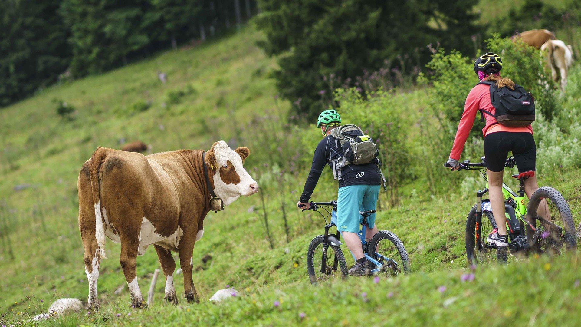 MTB Alm Radtour, © Dietmar Denger