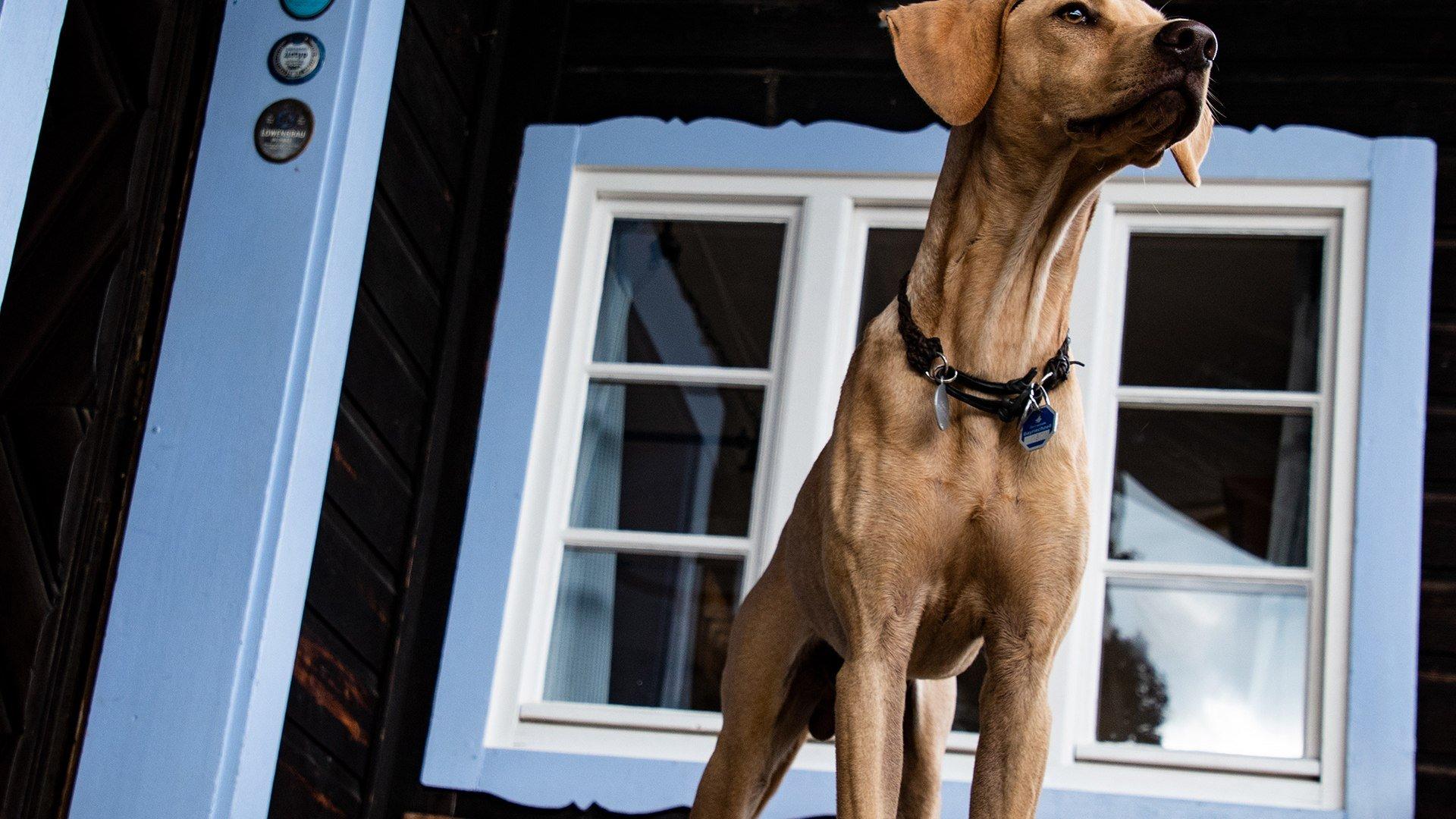 Hund Alm, © Florian Liebenstein