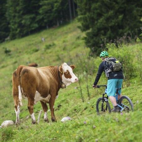 Radfahren Mountainbike, © Dietmar Denger