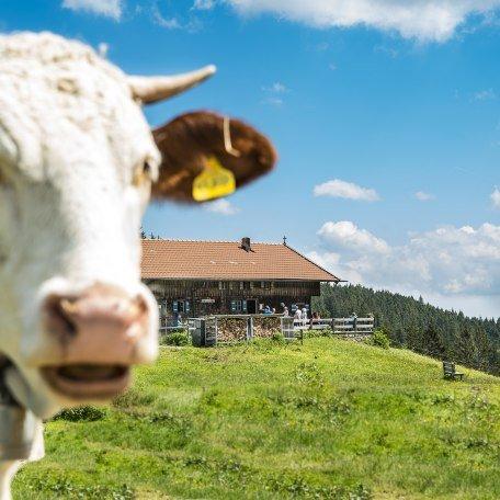Almen rund um Tegernsee und Schliersee laden zur Rast ein, © Dietmar Denger