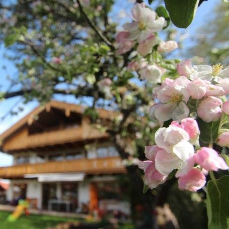 unser Haus, © im-web.de/ Gäste-Information Schliersee in der vitalwelt schliersee
