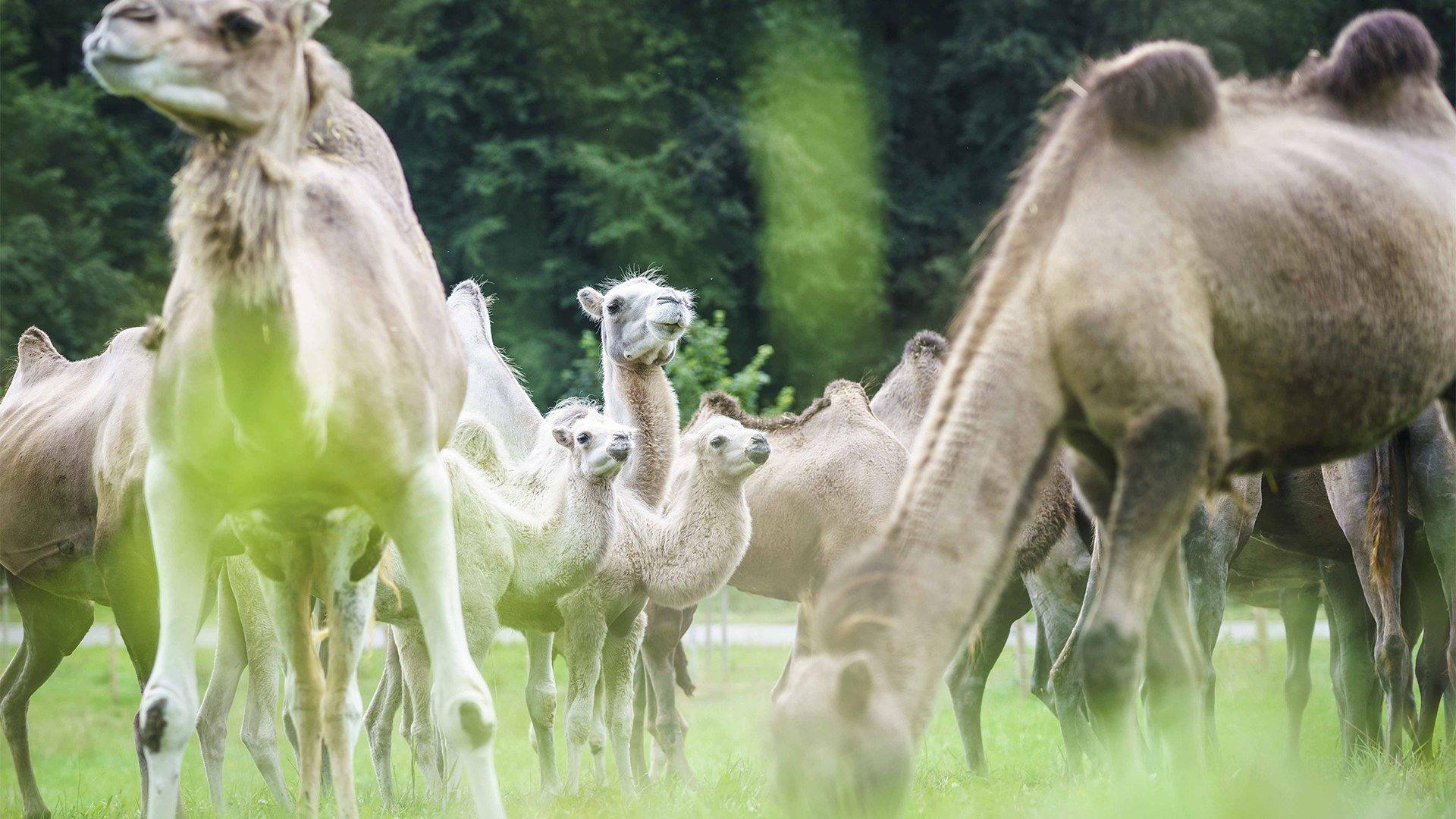 Bayern Kamele Valley, © Dietmar Denger