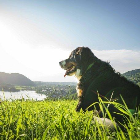 Urlaub mit Hund Bayern Schliersee, © Dietmar Denger