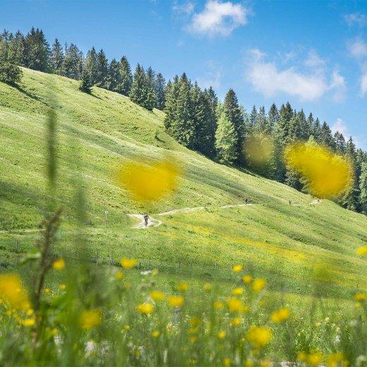 Almwiesen Tegernsee Schliersee, © Dietmar Denger