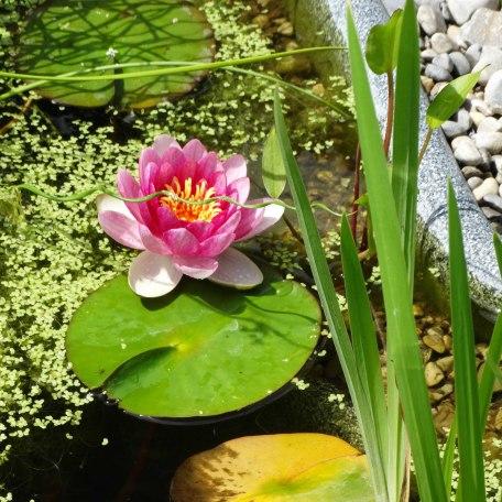 Am Teich, © im-web.de/ Gemeinde Hausham