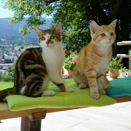 Streichelzoo, © im-web.de/ Gemeinde Hausham
