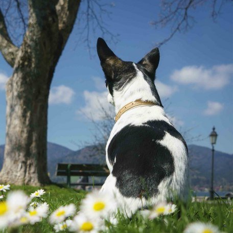 Urlaub Hund Bayern Tegernsee, © Dietmar Denger