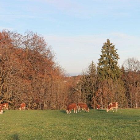 Herbststimmung, © im-web.de/ Alpenregion Tegernsee Schliersee Kommunalunternehmen