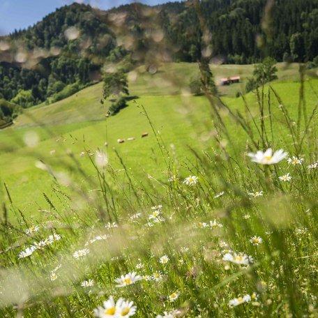 Erleben Sie saftige Almwiesen rund um Tegernsee und Schliersee, © Dietmar Denger